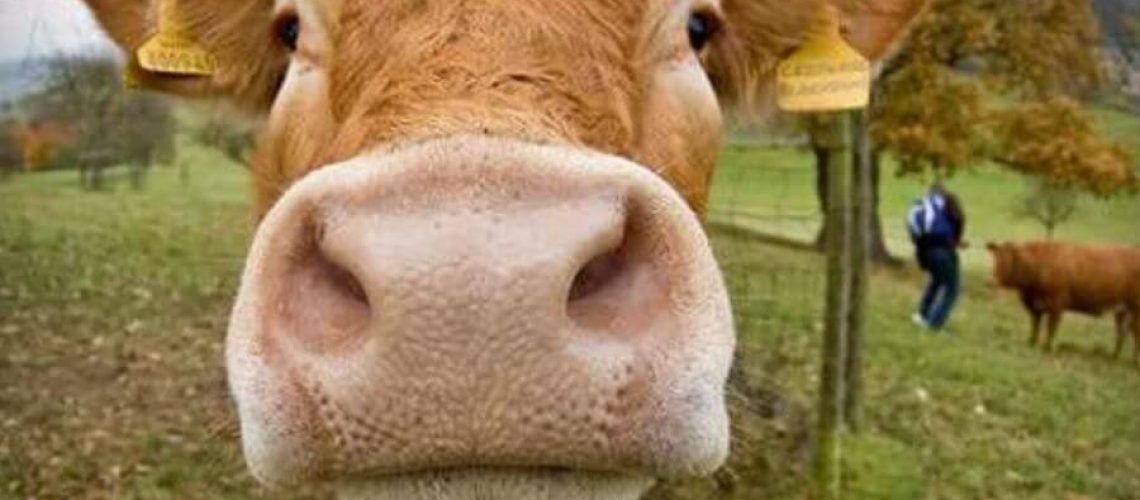 How Eating Grass Fed, Humanely Raised Meat Is Good for Your Waistline and the Environment